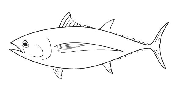 tuna fish coloring page products supply chains seafood products
