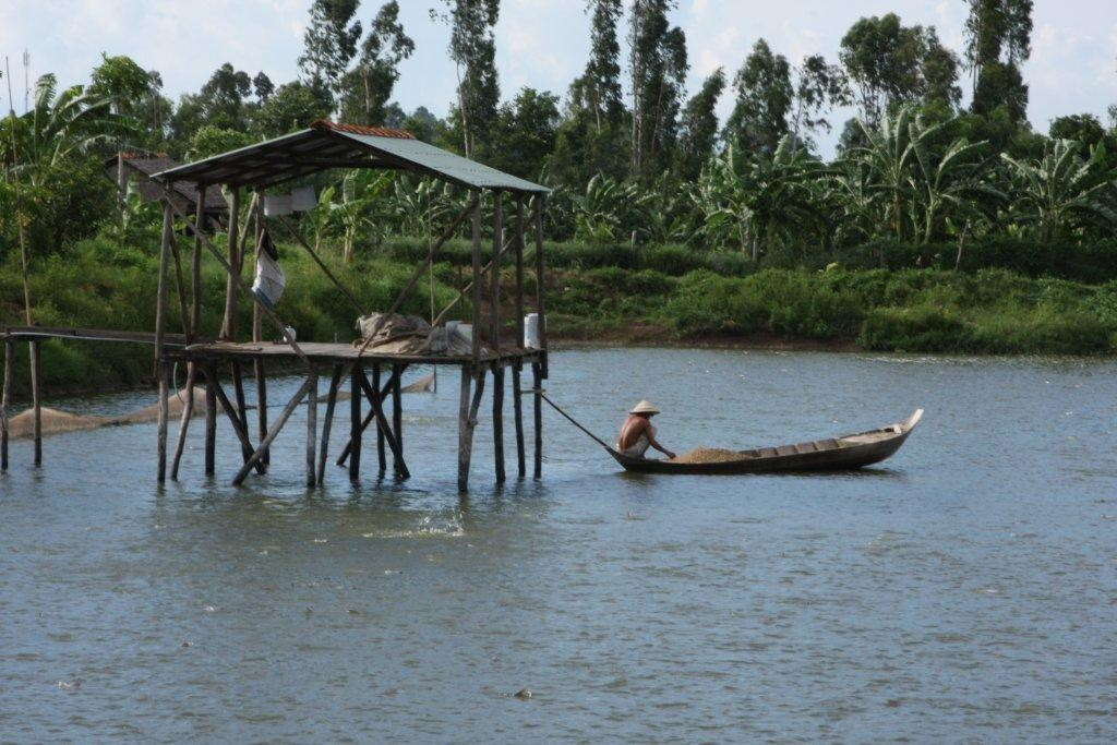 blueyou com, Consulting, Aquaculture